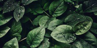 mycie roślin