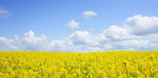 Nawozy do uprawy hydroponicznej